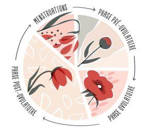 Cycle féminin, cycle menstruel